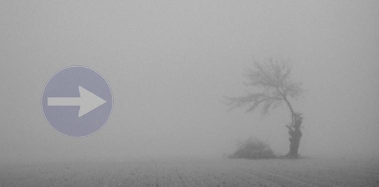freccia nebbia albero