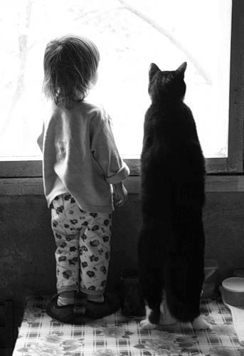 bimbo e gatto alla finestra