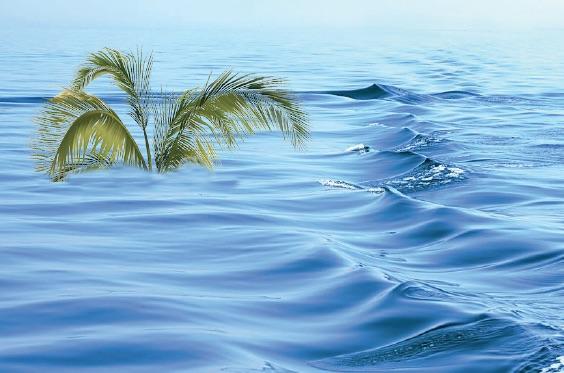 palma sommersa