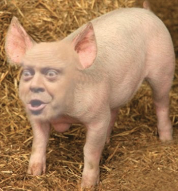 uomo maiale